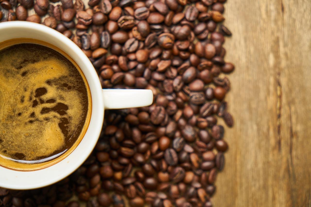Orinoco angelfish | Coffee and Creatures