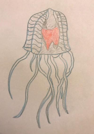 immortal jellyfish turritopsis dohrnii