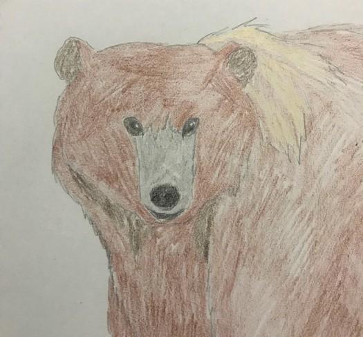 drawing of female kodiak bear