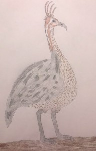 drawing of a quebracho crested tinamou